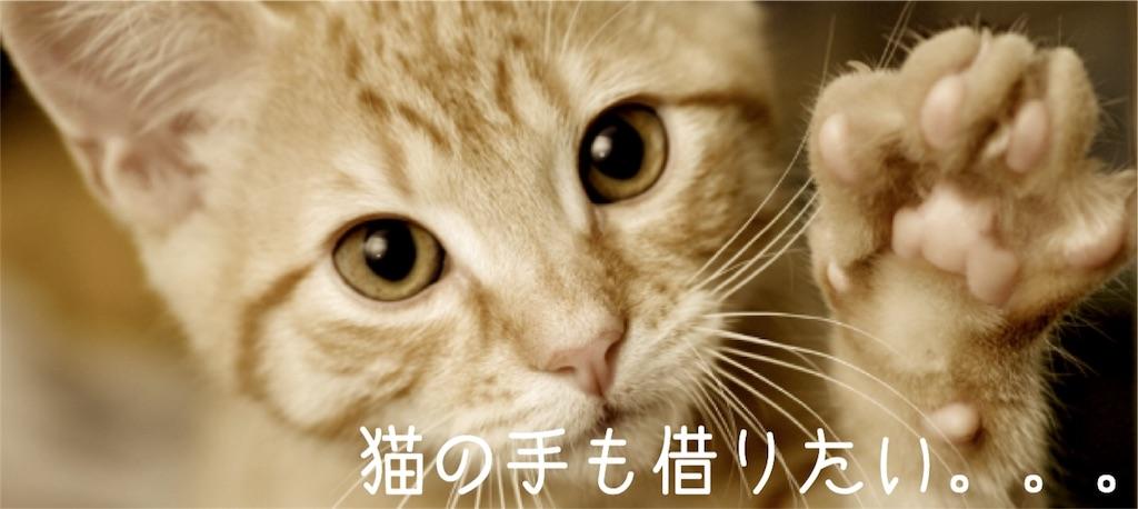 手 も たい 猫 の 借り